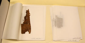 Small papyrus fragments held in tissue carriers within a larger folder.